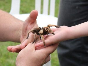 Mohammad bilal wrote a new post, I am obsessed with tarantulas, on the site Bilal'sdailythoughs
