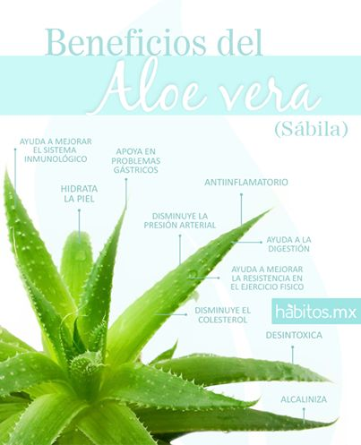 Hábitos Health Coaching | Beneficios del aloe vera.