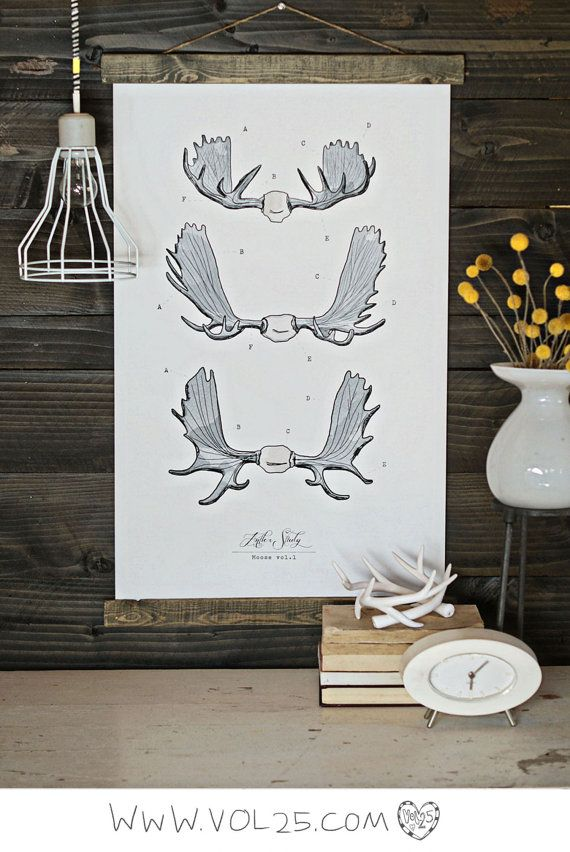 Experimenting with my new wood backdrop!! Loving it - Vintage Inspired Science Posters - ANTLER STUDY Moose VOL 1. $70.00, via Etsy.