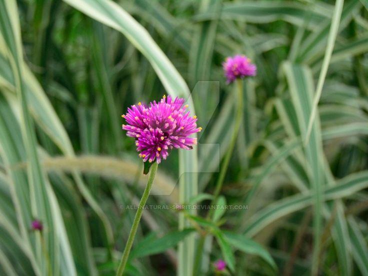 Pink flower by All-Natural-Spirit.deviantart.com on @DeviantArt