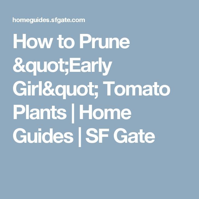 """How to Prune """"Early Girl"""" Tomato Plants 