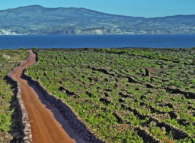 Madalena, Pico Island, Azores, Portugal (landscape vineyards pico sunny day background neighboring island) - a photo by Fernando Abreu Ilha do Pico, Açores, Portugal - vinhas.
