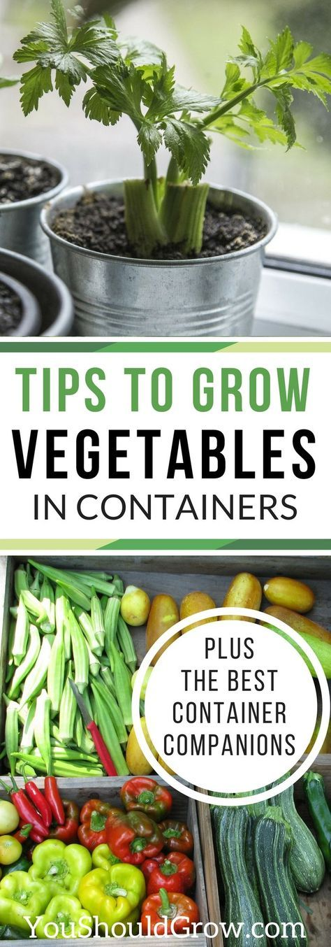 101 best images about container gardening on pinterest for Grow your own vegetables