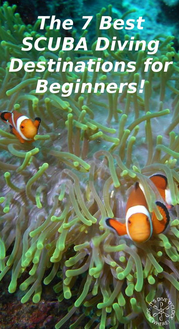 The 7 Best SCUBA Diving Destinations for Beginners! Where to start your SCUBA diving adventure? The best places to learn how to dive. http://www.diveoclock.com/blog/Diving_destinations/  scuba | scubadiving | underwater | diving | scubadive | padipro | divetheworld | scubadiver | diveinstructor |  duiken | tauchen | under the sea | duikinstructeur | duikopleiding | diving | travel | discover scuba diving | PADI Open water | SSI