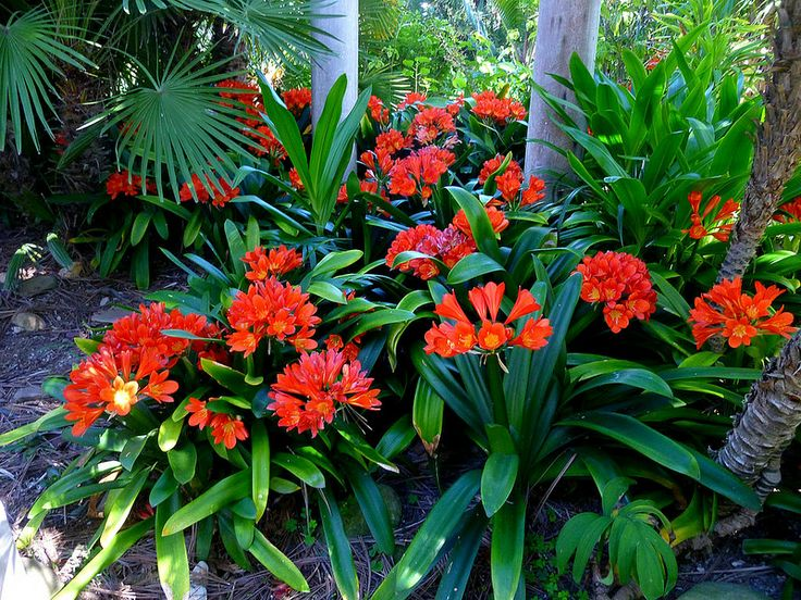 1000 images about gardens tropical designs on pinterest for Jardines sencillos