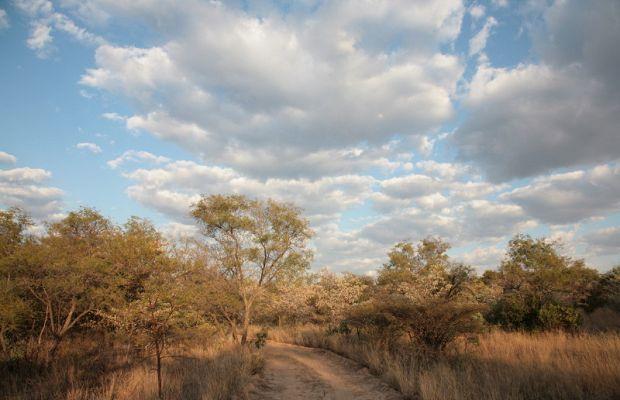 Bushveld – Blog – South African Tourism