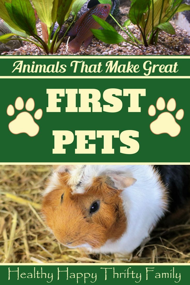Animals That Make Great First Pets Easy To Care For And Friendly Pets Kids Parenting Easy Pets Animals For Kids Low Maintenance Pets
