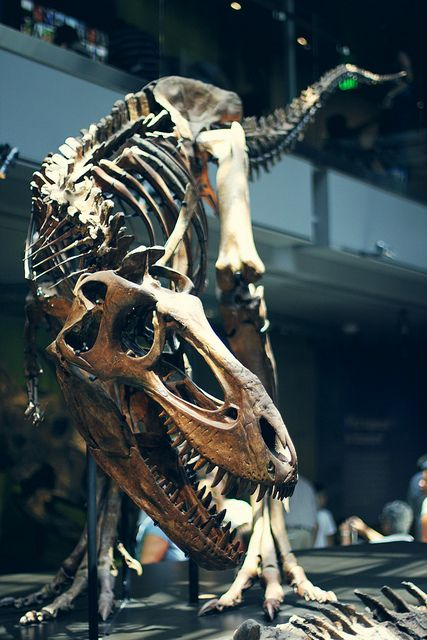 Los Angeles Natural History Museum http://ListProfitPLR.com