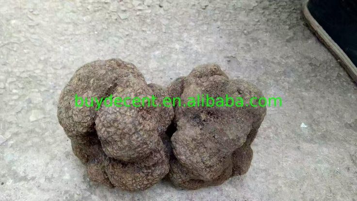 competitive price wild truffle mushroom dry anti-cancer with best service