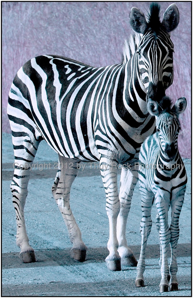 Leather Accent Tag - Zebra Foal by VIDA VIDA YJw6OM3YbL