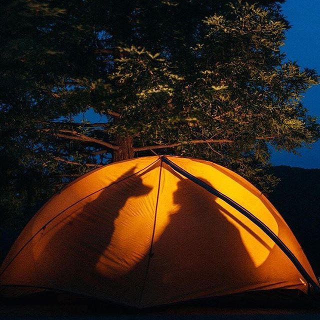 The most realistic shadow puppets weu0027ve ever seen. #c&ingwithdogs @willowthewildandco & 63 best Dogs in Tents images on Pinterest | Tent Tents and Campsite