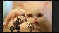 Lucu Kucing Video 2016 - Anda Tidak Bisa Berhenti Tertawa - Funny Videos at Videobash