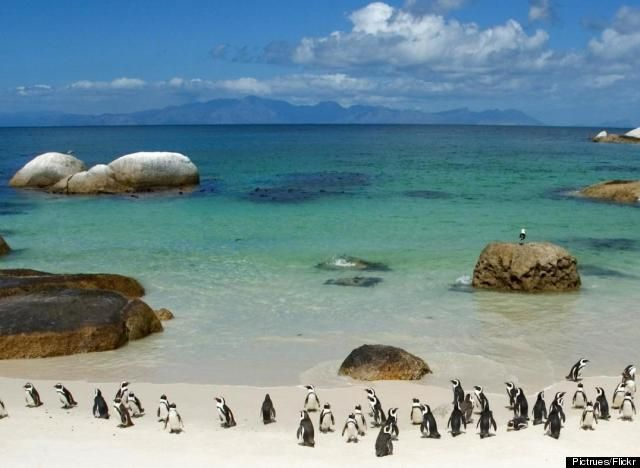 Enjoy beautiful Cape Town while volunteering with Via Volunteers in South Africa. http://www.viavolunteers.com/