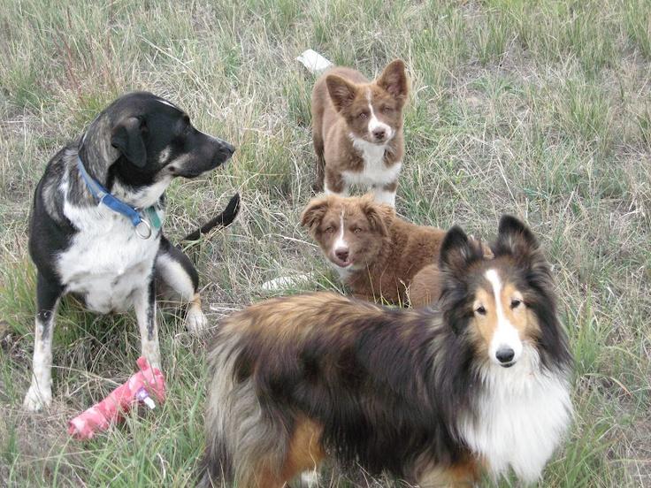 The Pack - Tiki, Talisker, Bear & Baci
