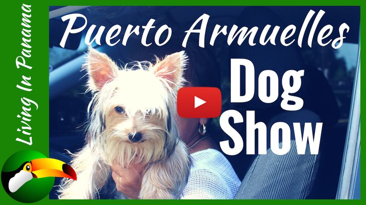 On July 23rd, Puerto Armuelles' 2nd Annual Dog show happened.  We stopped by last year.  But this year we were in it.Although, that is only because there...