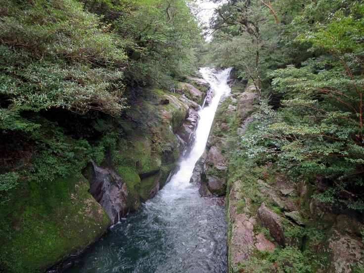 The Shiratani River flows through the Shiratani Unsuikyo Ravine high up on Yakushima Island, Japan. The Hiryu Otoshi Waterfall is a highlight.