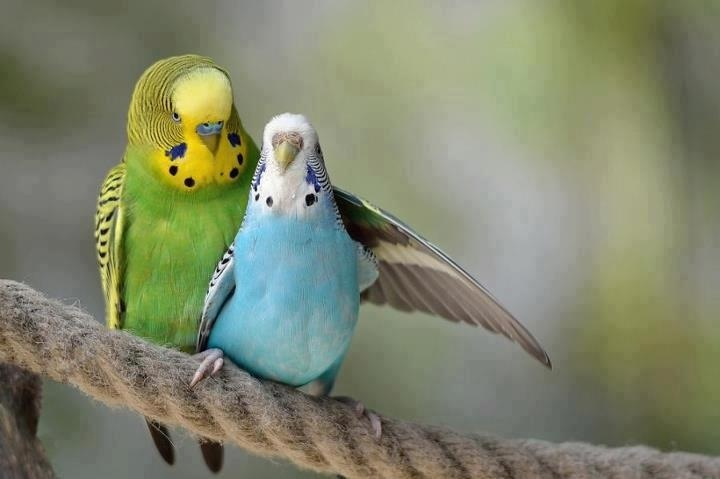 green bird great animal - photo #35