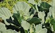 Globo Ecologia - Agricultura sustentável - íntegra | globo.tv