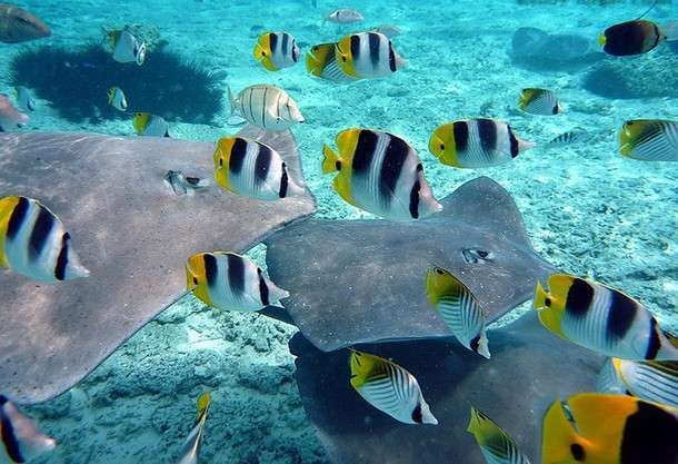 Explore The Beauty Of Caribbean: 1000+ Ideas About Grand Cayman On Pinterest