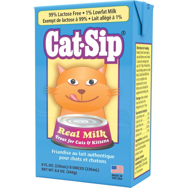 8 oz is your cat lactose intolerant incredibly many