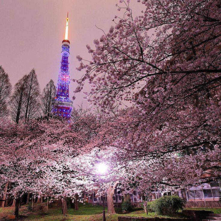 . Tokyo Tower was special illuminated for World Autism Awareness Day. And it's a season of full blooming cherry blossoms. (2016.04.02.Sat.) . #worldautismawarenessday #mr_E_nightview #japan_night_view #japan_night_view_member #ザ花部 #night_captures #yakei_luv #japan_Night_view夜桜2016 #mrE_TT #landscape_captures #worldcaptures #wc_exclusive #wonderful_places #ahd_shotz #awesome_earthpix #buildingstylesgf . . 土日は天気悪いという予報だったので富士山は諦めて都内の桜の名所を回りました . 富士山がダメなら僕には東京タワーがあるっ てなことで芝公園毛利庭園目黒川 . #mr_ebisu…