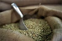 Get rid of the excess pounds with the help of green coffee extract.