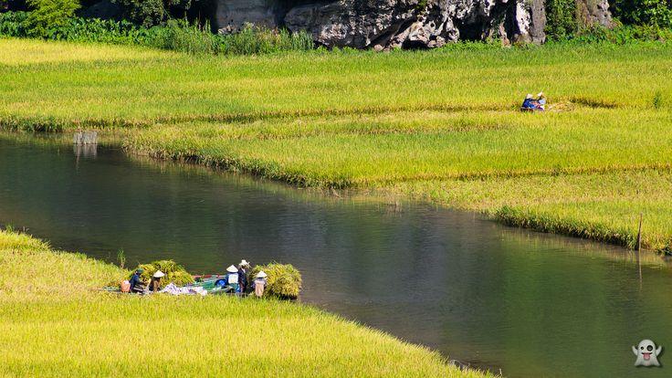 """Surnommée """"la Baie d'Halong terrestre"""" en raison de la similitude de ses paysages montagneux à ceux de la huitième merveille du monde, #TamCoc (qui signifie en vietnamien """"trois grottes"""") est l'un des plus beaux sites du Nord #Vietnam. Plus d'informations en cliquant le lien suivant : http://www.amica-travel.com/vietnam-sites-a-decouvrir/nord-vietnam/ninh-binh/tam-coc-baie-halong-terrestre Crédit Photo : Titanevn"""