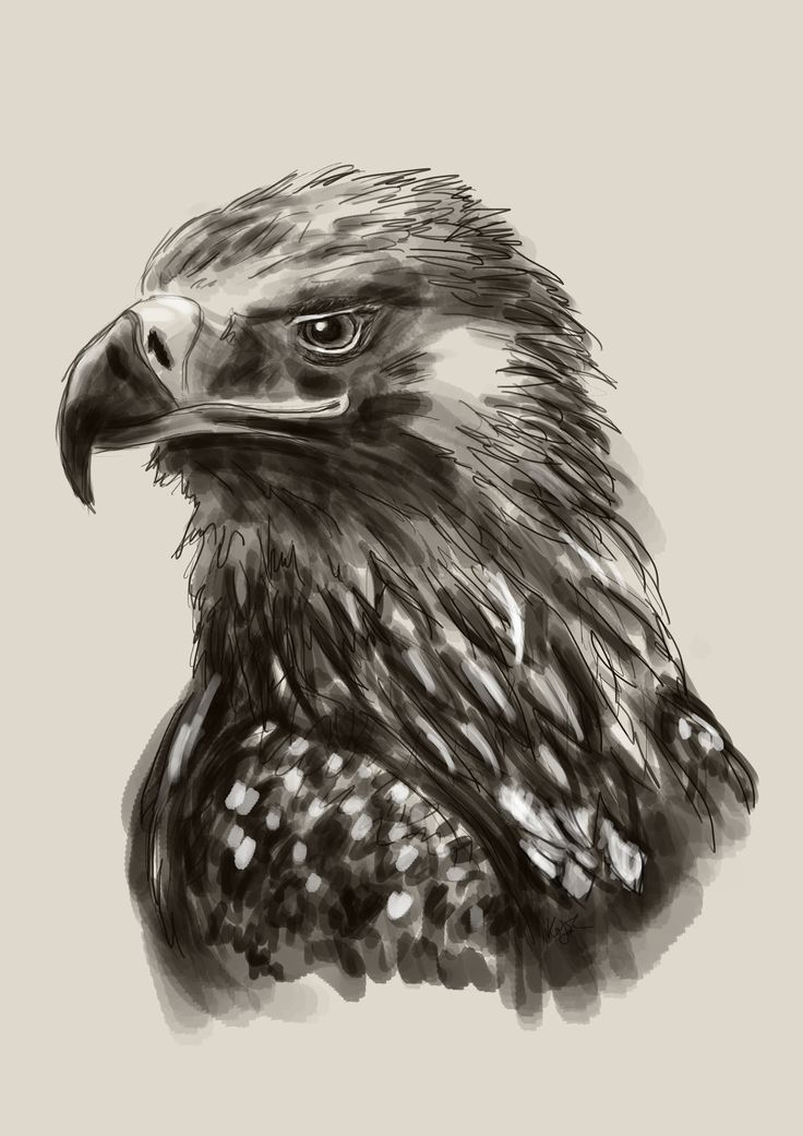 Aquila heliaca - Eastern imperial eagle (Parlagi sas). I painted it for a contest of a nature conservation organization. The task was to design canvas bags with the illustration of specified species. Art by Kölyök