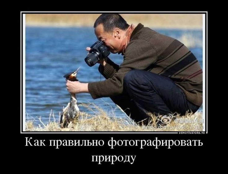 Днем, смешное картинки демотиваторы фото