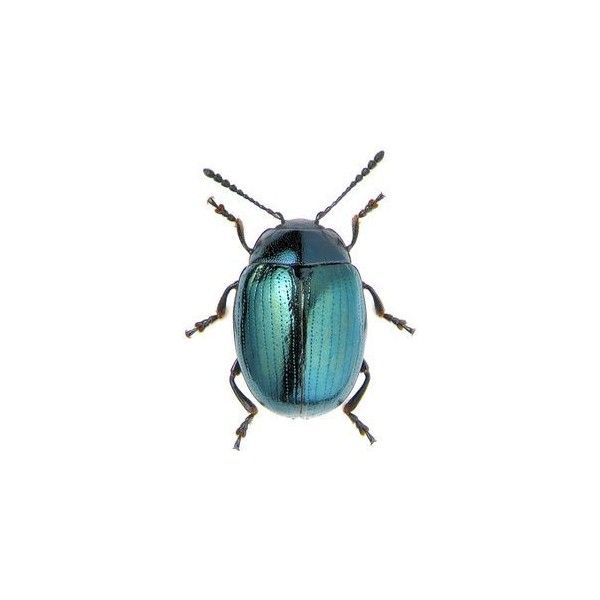 6886 best Neat bugs images on Pinterest | See more best ...