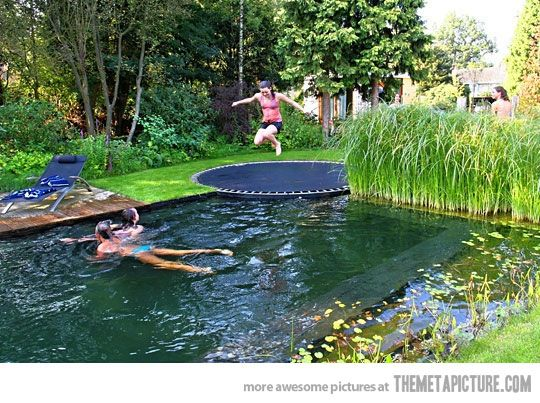 Trampoline + naturally filtering plants = best pool ever