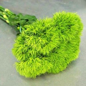 1000+ images about Green Trick Dianthus on Pinterest ...