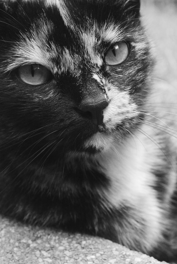 Photography | Black and white | Cat