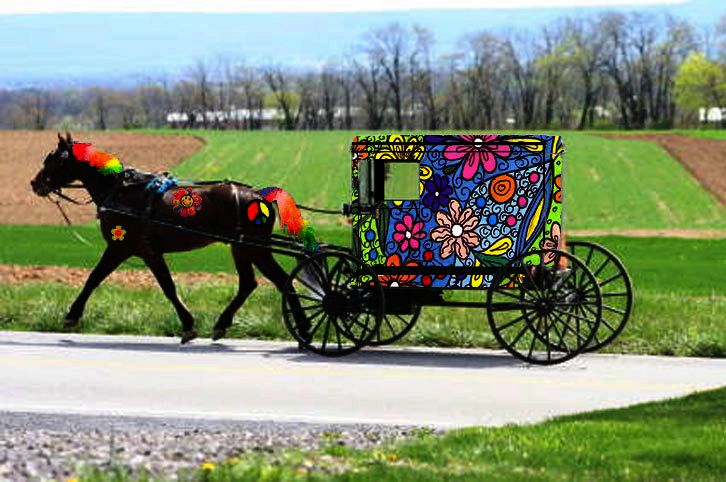 1611 best images about fun things and amish life on for Amish country things to do