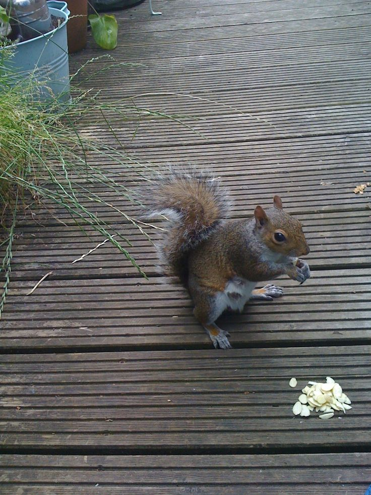 [Scene 1 cont; cut from Django running down the stairs to John Barry in the garden munching nuts] 'I'm not worried,' John B mutters under his breath as he crunches his nuts - almonds no less that Django's roasted. 'Easiest gig I've had all summer.'