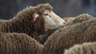 Från ull till yllekläder
