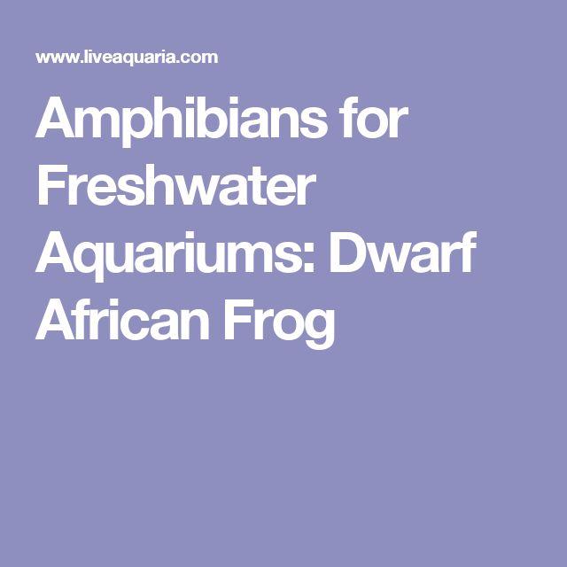 Amphibians for Freshwater Aquariums: Dwarf African Frog