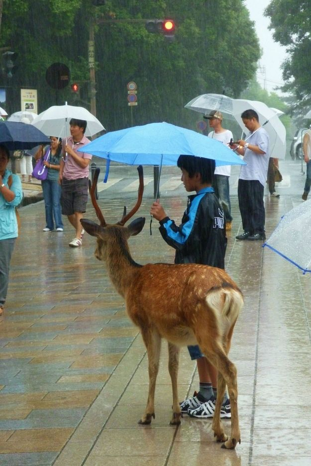 Just taking a walk in the rain with a buck...sharing an umbrella. Typical Tuesday...