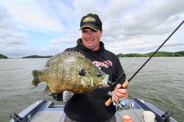 17 best images about fishing on pinterest bass fishing for Bluegill fly fishing