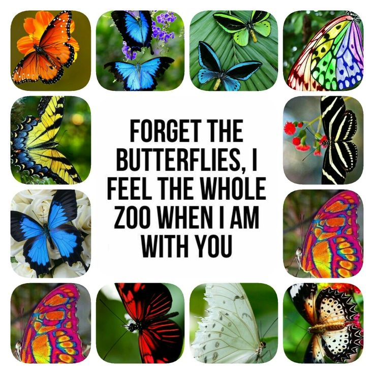 Forget the butterflies, I feel the whole zoo when I am with you