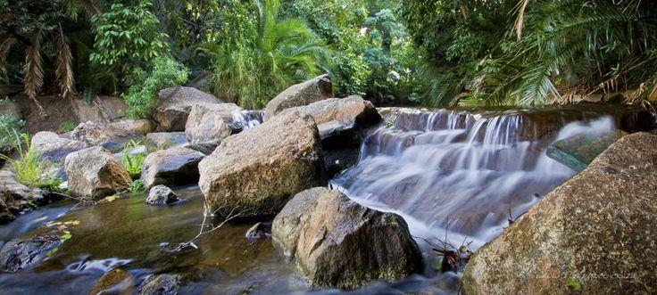Rain Forest by Shaun Thomas on www.digitalgallery.co.za