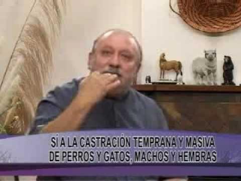 ▶ DR. ROMERO EN TELEFÉ NOTICIAS -- Día del perro -- Historia de Chonino - YouTube