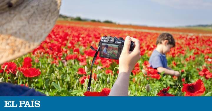 De los tulipanes holandeses a las floreadas colinas de la Toscana italiana, la primavera inicia un estallido de color en todos los rincones del planeta