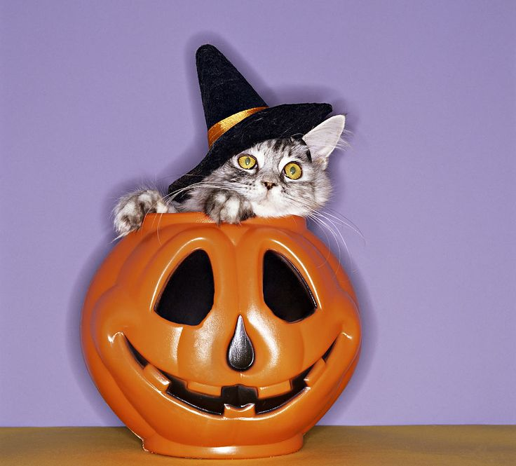 cats with costumes halloween - Funny Cat Halloween