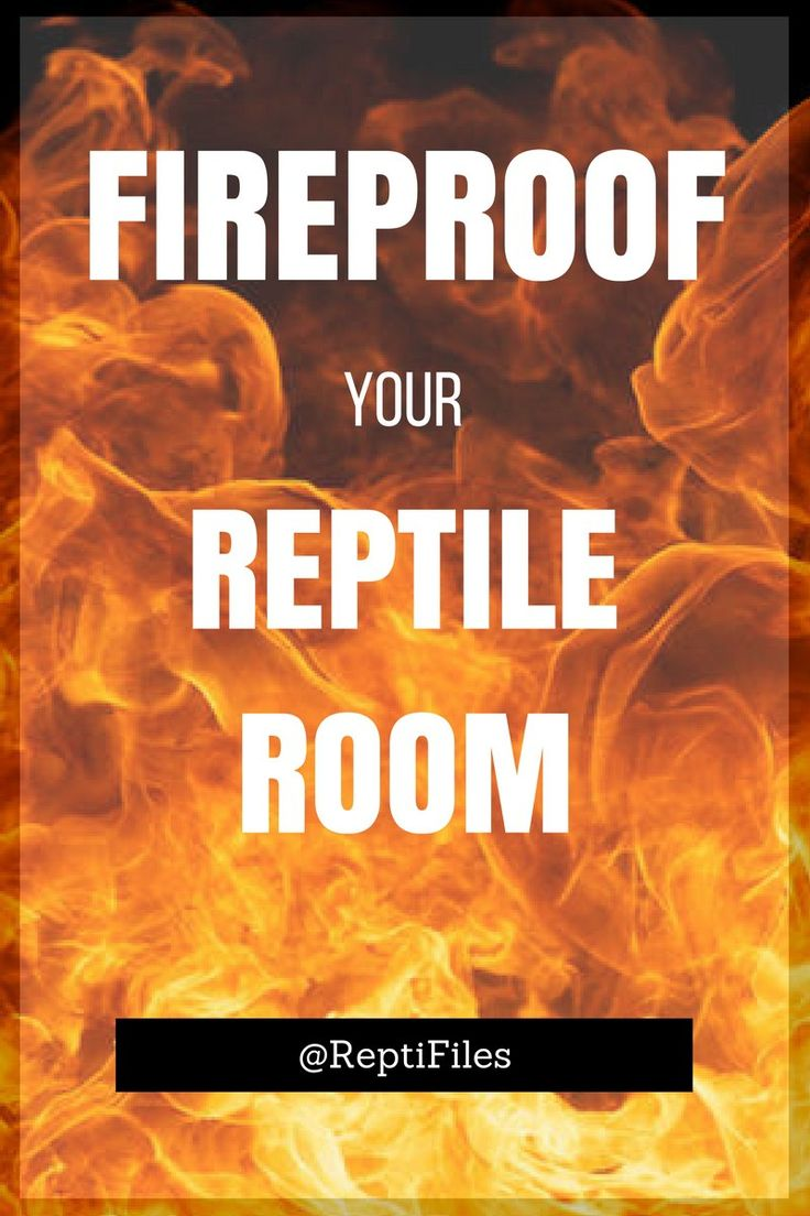 Let's face it—reptile keeping is a huge fire hazard. Protect your pets with these essential tips from the blog at ReptiFiles.
