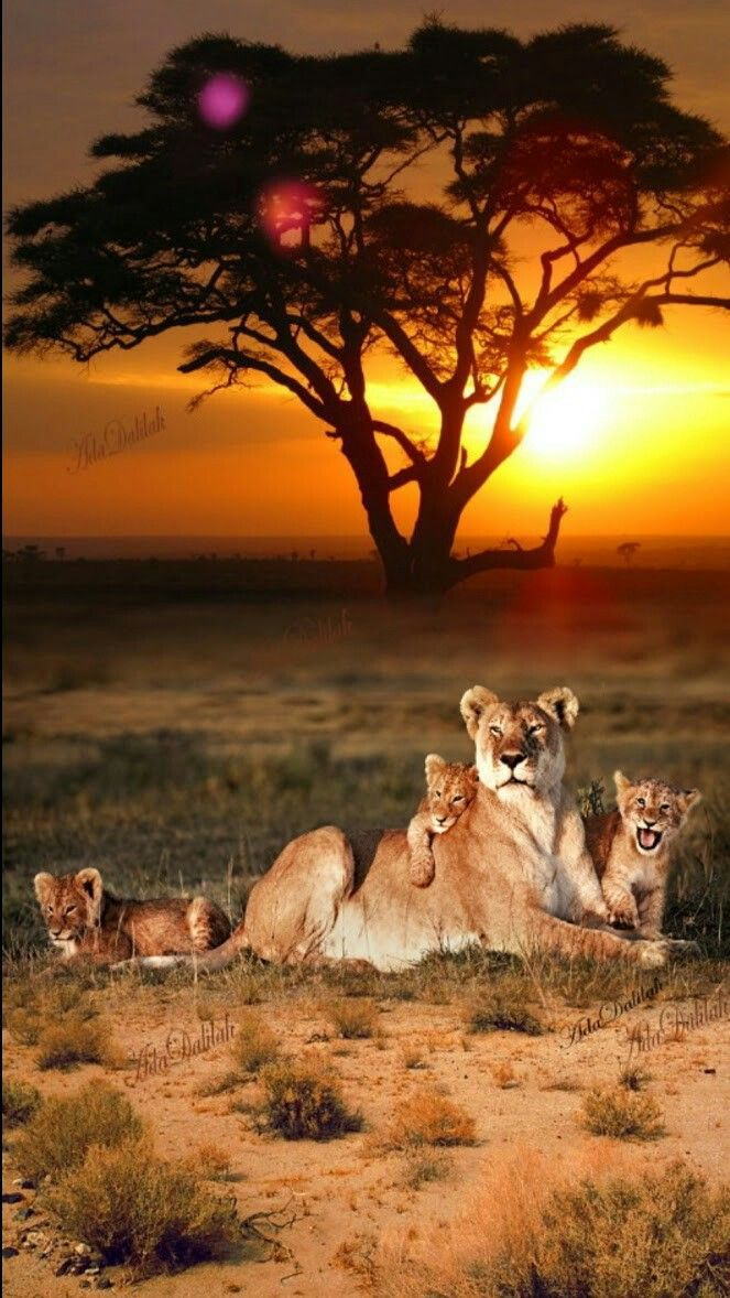 A beautiful family of big kitties with an also beautiful sunset in the background.