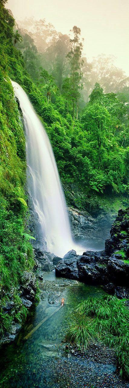 Cedar Falls, Dorrigo National Park, NSW Australia More