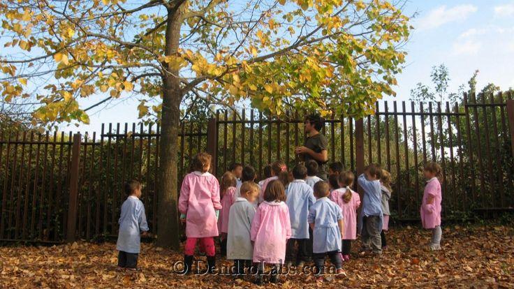 sicurezza e alberi nelle Scuole di Roma