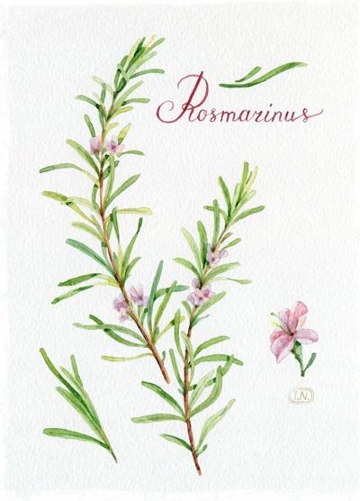 Rosmarinus by Natalia Tyulkina, via Behance