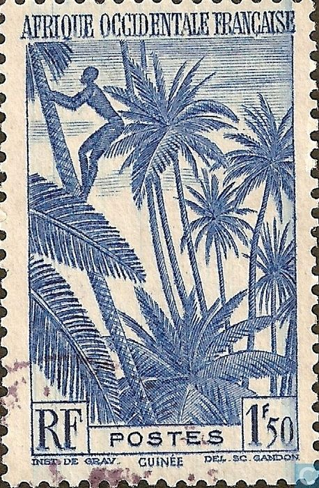 1947 AOF French West Africa - Gathering coconuts